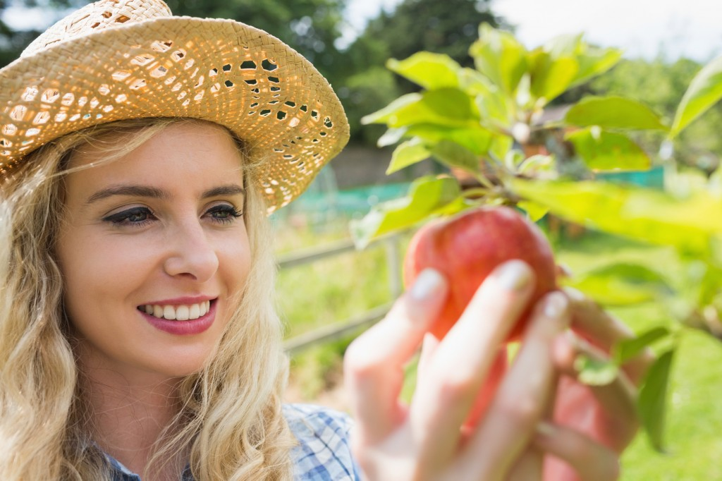 Young blonde picking an apple from a tree in an orchard on sunny day