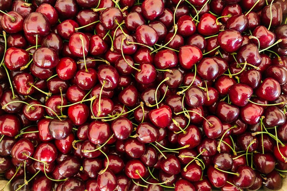 Faire du Fruitpicking dans les champs de Cerises en Australie