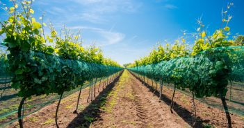 rows of vineyards - selective focus, copy space