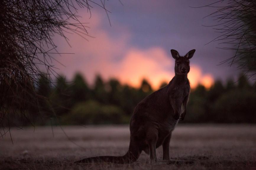 @Tourisme australia