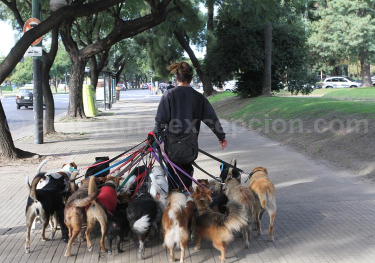 Promeneurs de chiens dans les rues de Buenos Aires