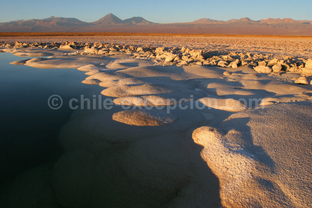 Laguna Cejar, Salar de Atacama, Chili. Crédit Excepcion Chile