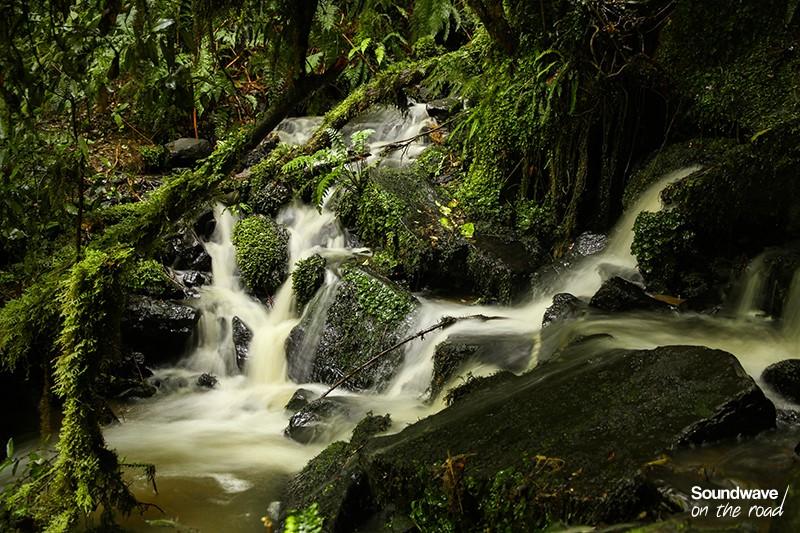 Nature NZ