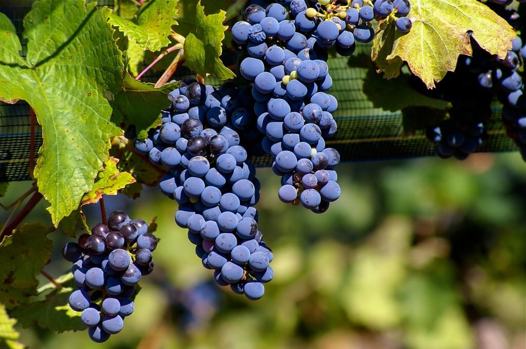 vin-argentine-Mendoza