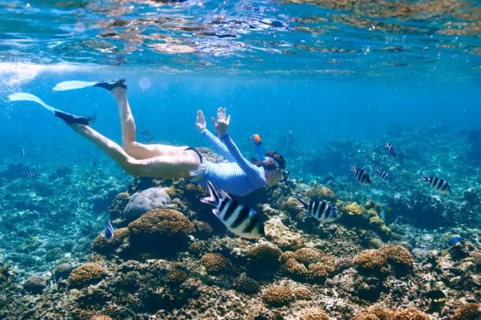top 5 des animaux avec lesquels nager en australie