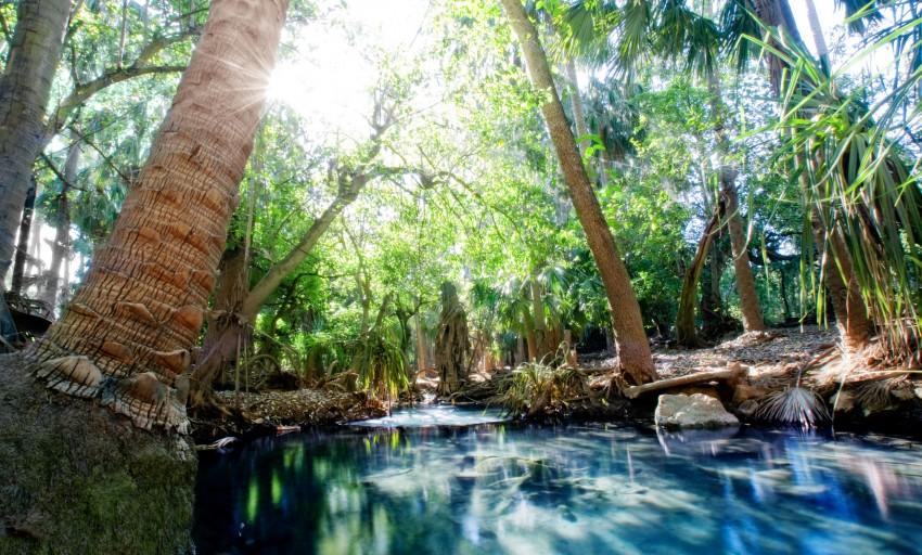 Photo des bains a mataranka en australie