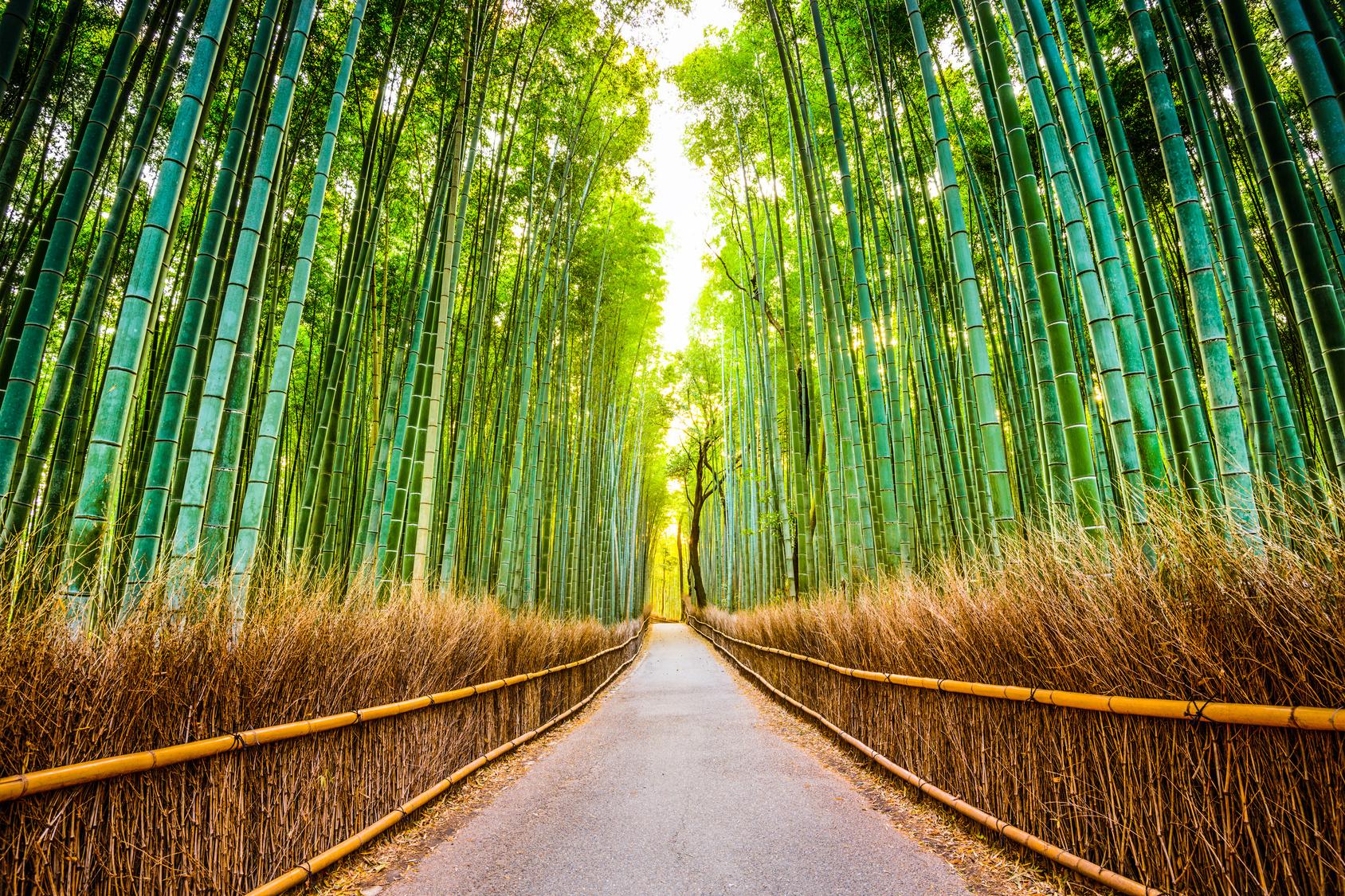 Photo de la foret de bambous a Arashiyama, un incontournable en WHV Japon