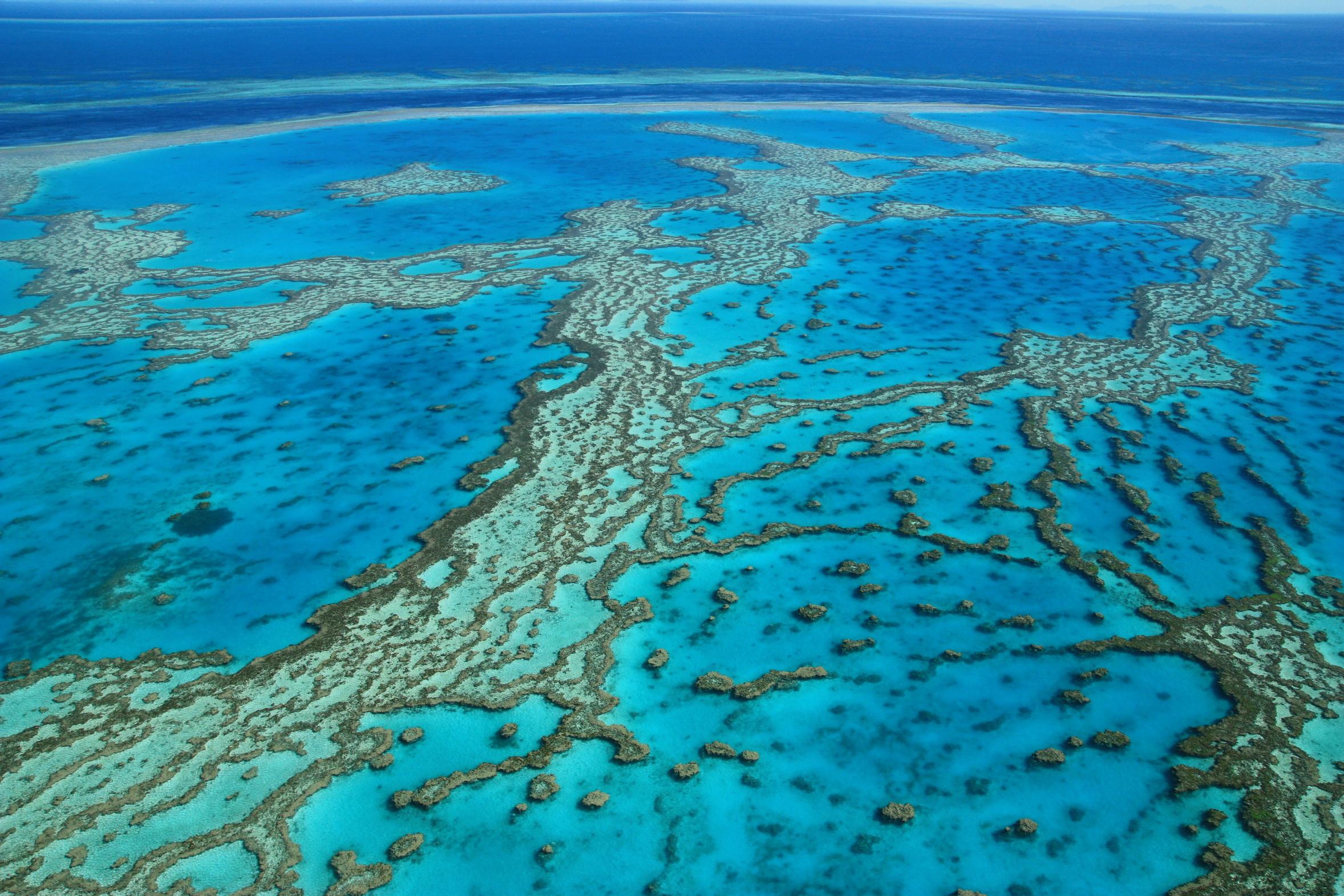 Photo de la grande barriere de corail dans le queensland en australie