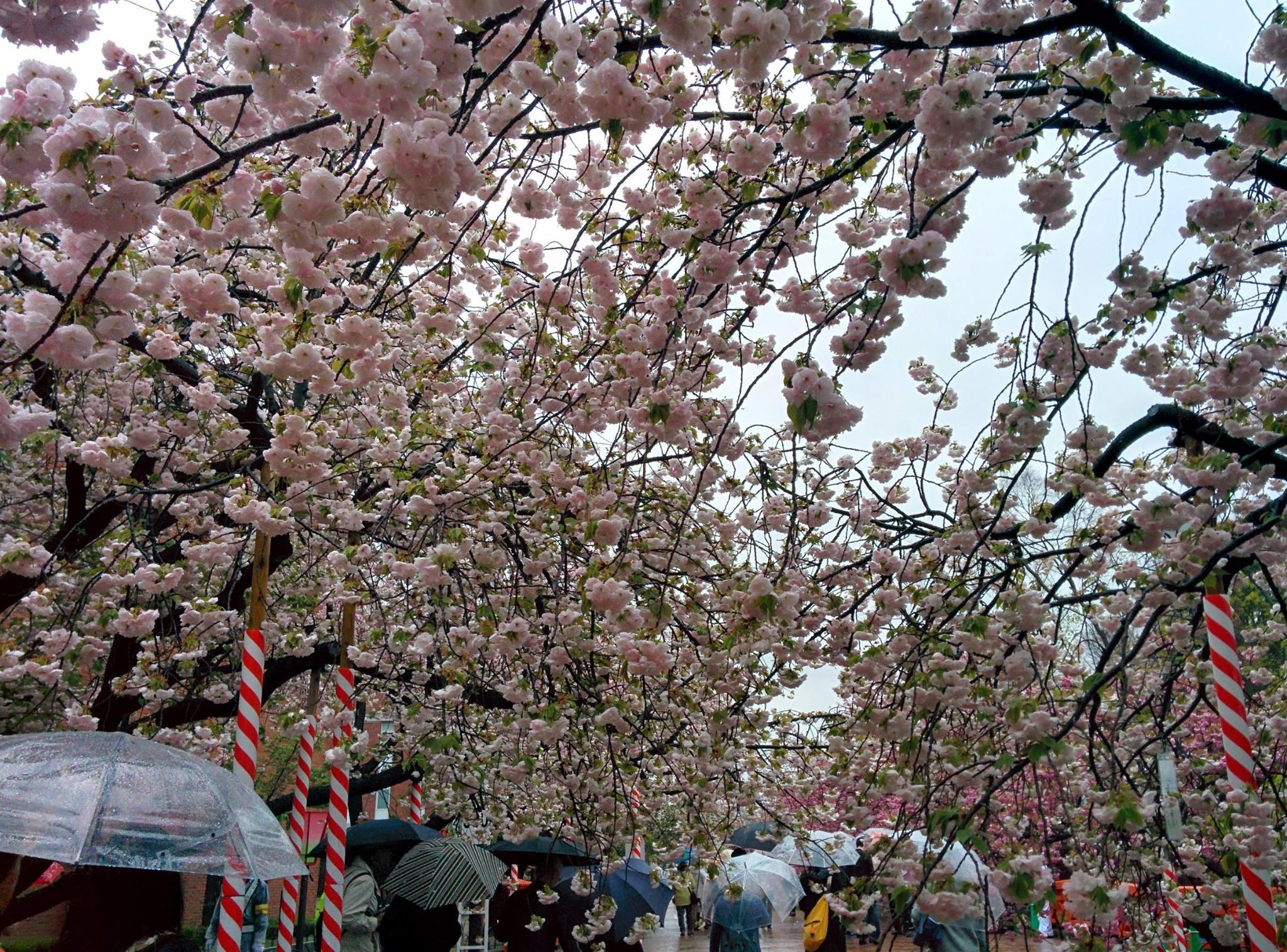 Xavier et Valentine à la découverte de lieux insolites à Tokyo