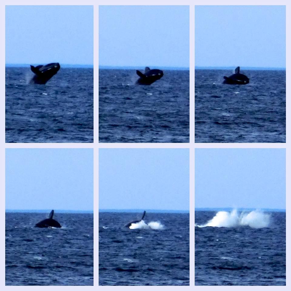 Baleine en road trip