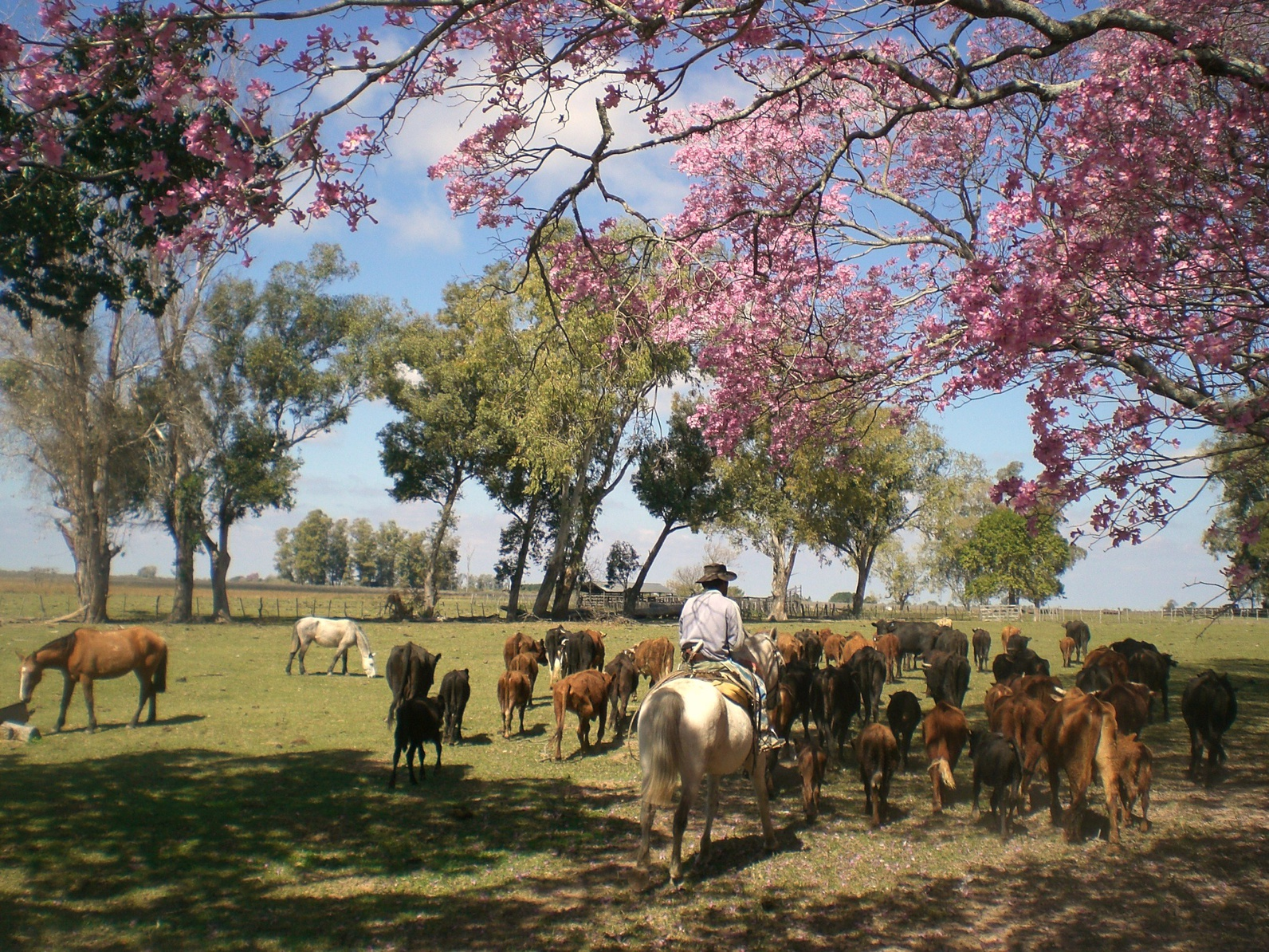 Ranch Estancia en Argentine