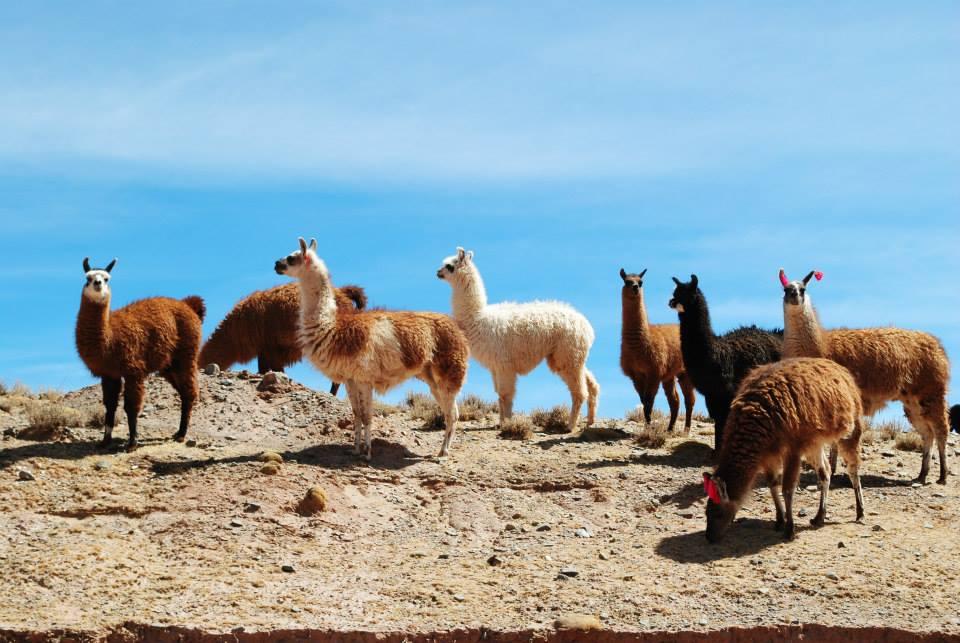 Voyage en Argentine : 5 expériences à vivre absolument !