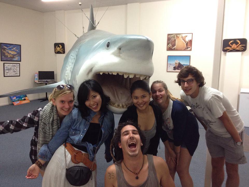 Le requin de Streaky Bay