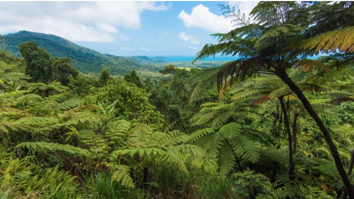 daintree forest lovers travelers