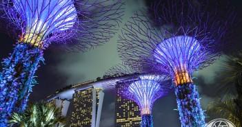 singapour-tree