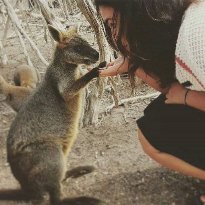 kelly avec un kangourou en australie