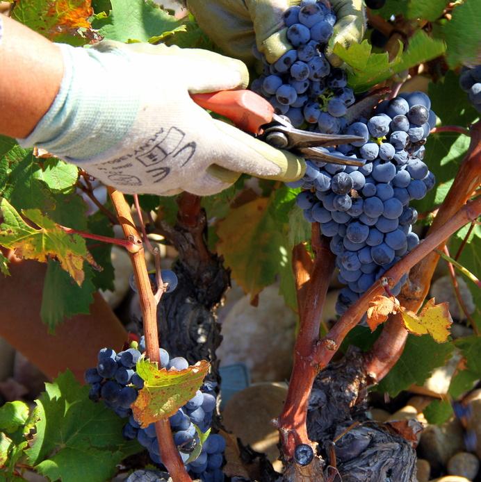 Conseils pratiques pour votre job de fruit picker
