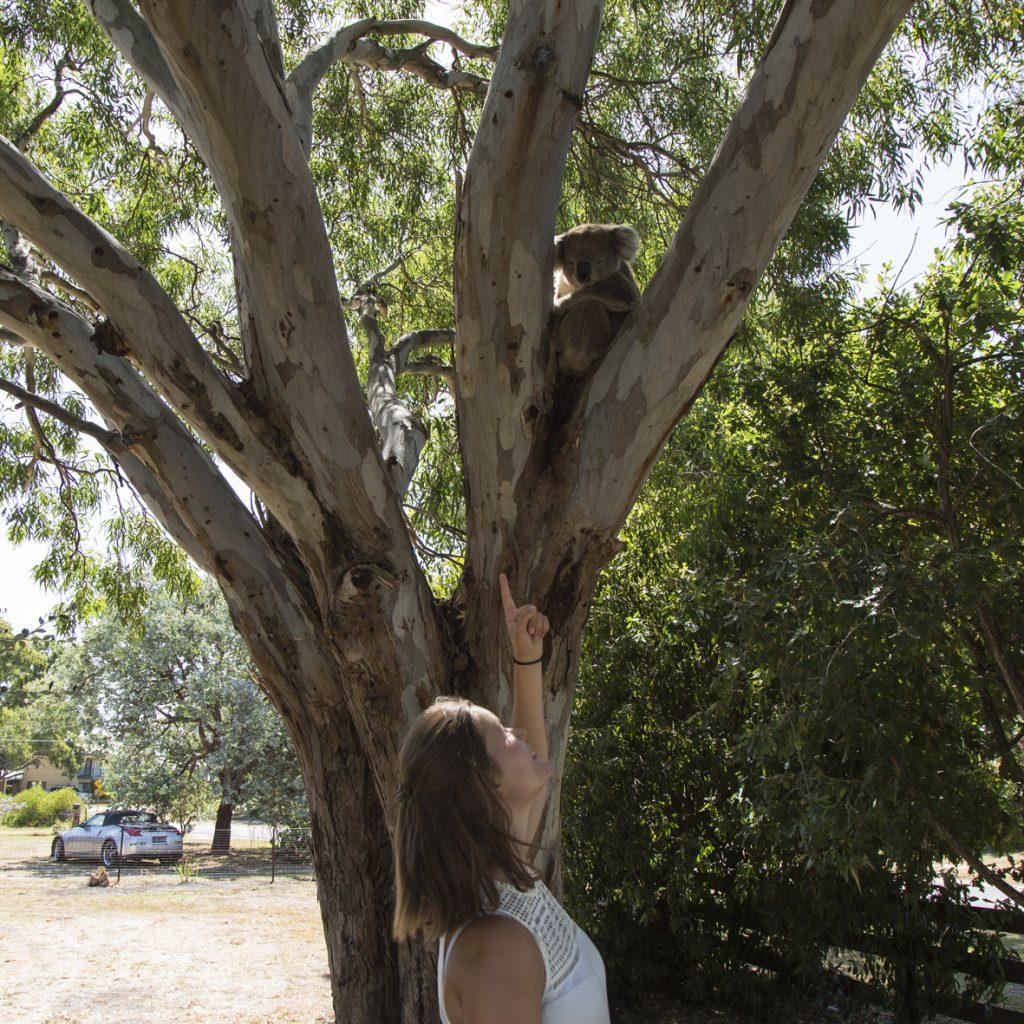 Soline a fait du wwoofing en Australie