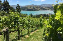 Comment faire du HelpX en Nouvelle-Zelande ?