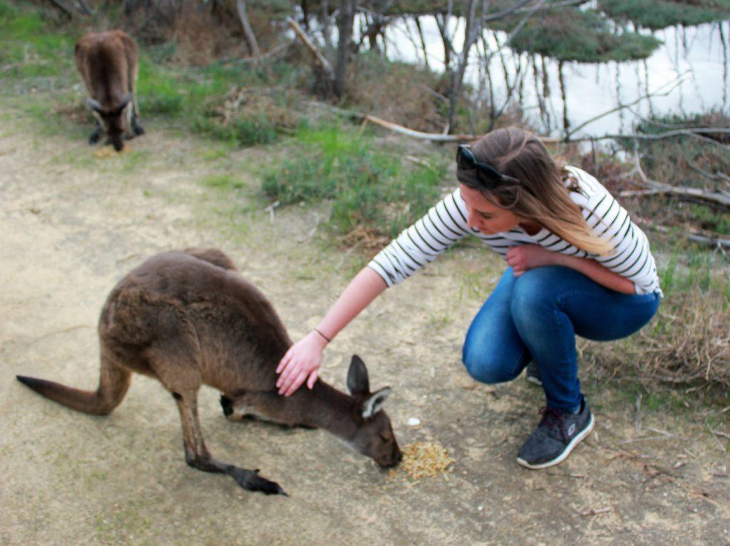 des kangourous a Heirisson Island