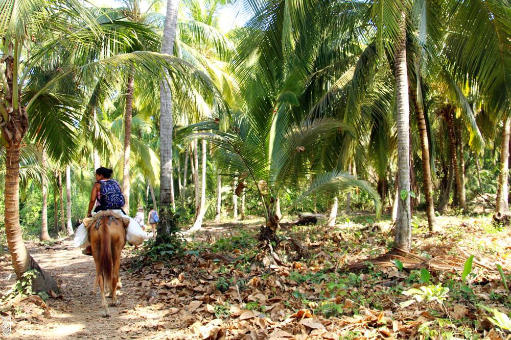 visite a cheval du parc national de tayrona