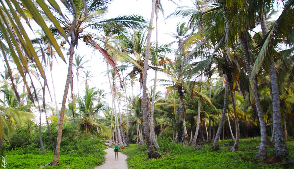amelie au milieu des palmiers du parcd national naturel de tayorna