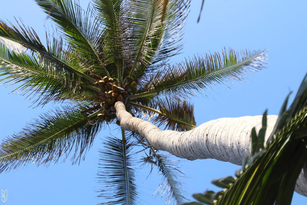 palmier dans le parc naturel de tayrona