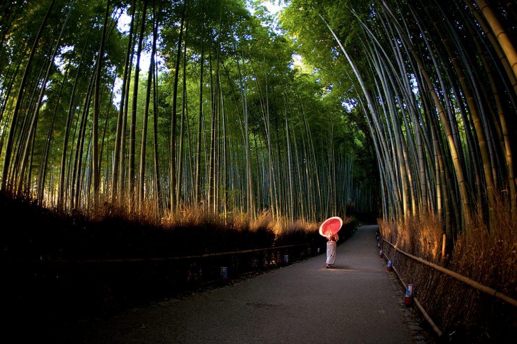 sentier traversant la bambouseraie d'Arashiyama
