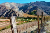 Visiter la vallee de l'Elqui au Chili