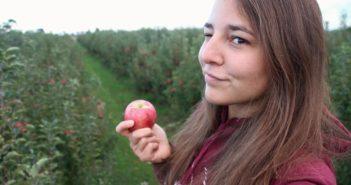 Travailler dans une ferme en Australie dans la cueillette de fruits