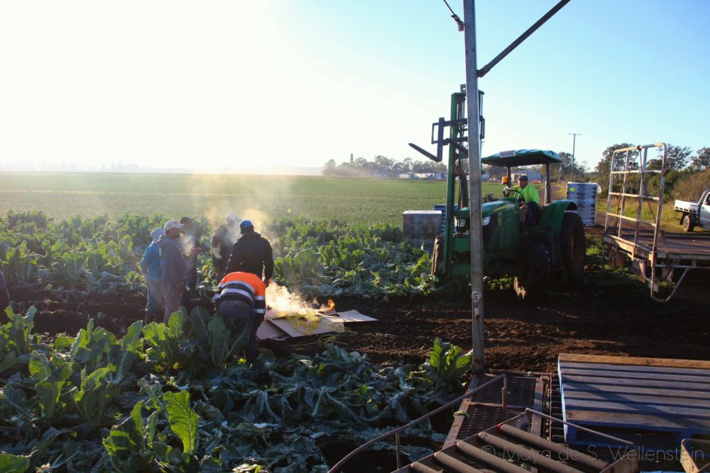 travailler dans les champs en Australie