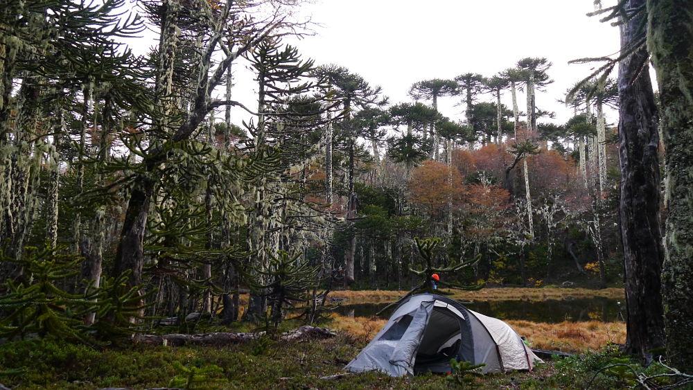 tente lors d'un trek au Chili dans le parc Huerquehue