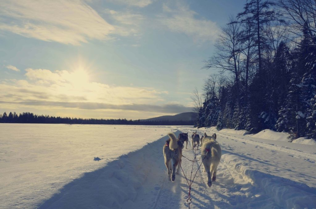 comment devenir guide musher au Quebec