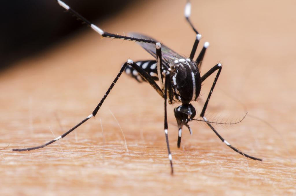 comment se premunir des moustiques au bresil ?