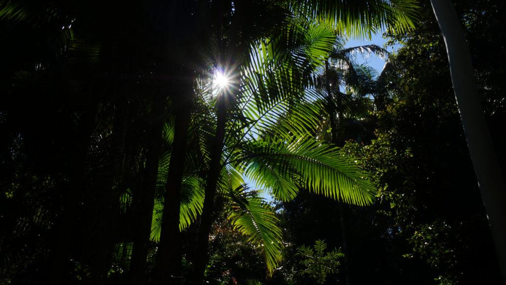 trek mont warning australie
