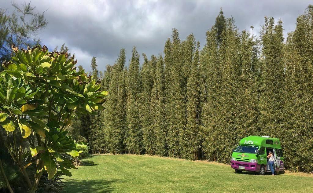 Location van Nouvelle-Zélande : faut-il choisir un van ou un camping-car ?