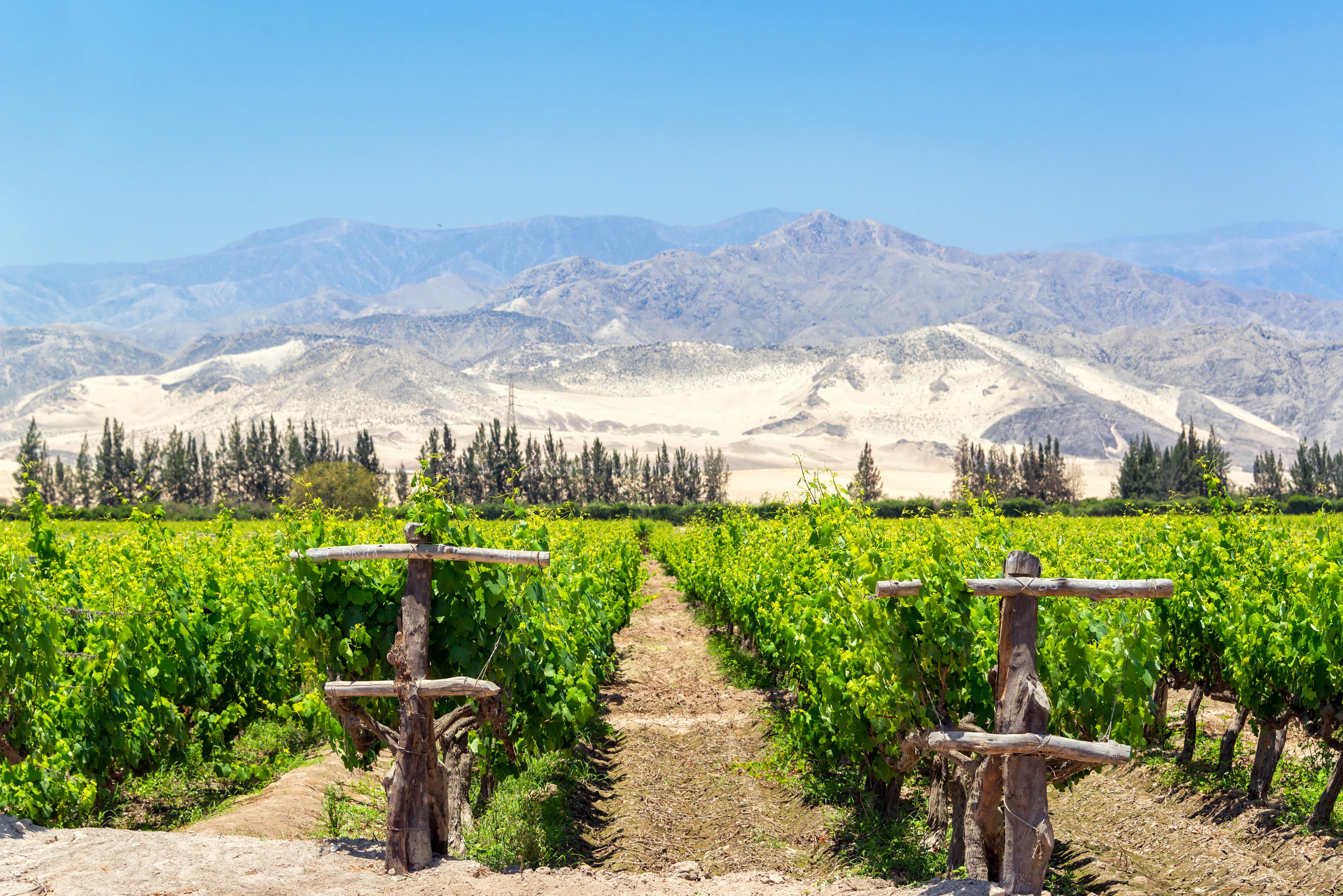 quels vignobles visiter au Pérou ?