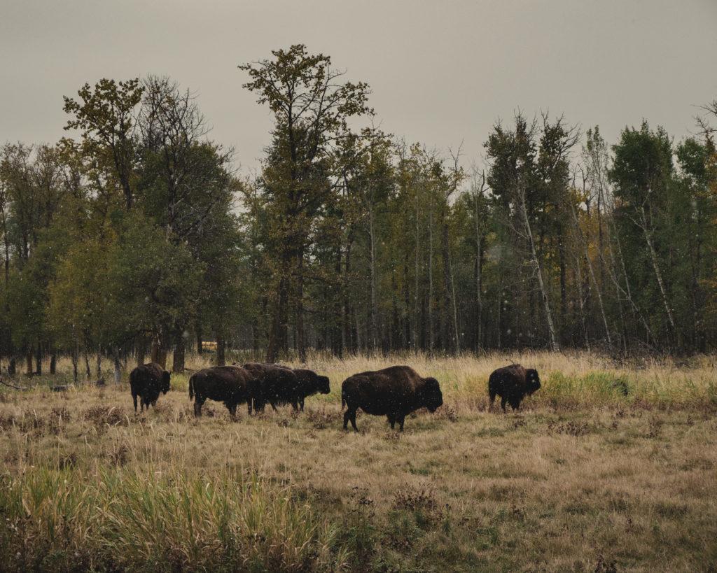 road trip en Alberta près d'Edmonton
