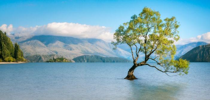 Chute du nombre de Français en PVT Nouvelle-Zélande