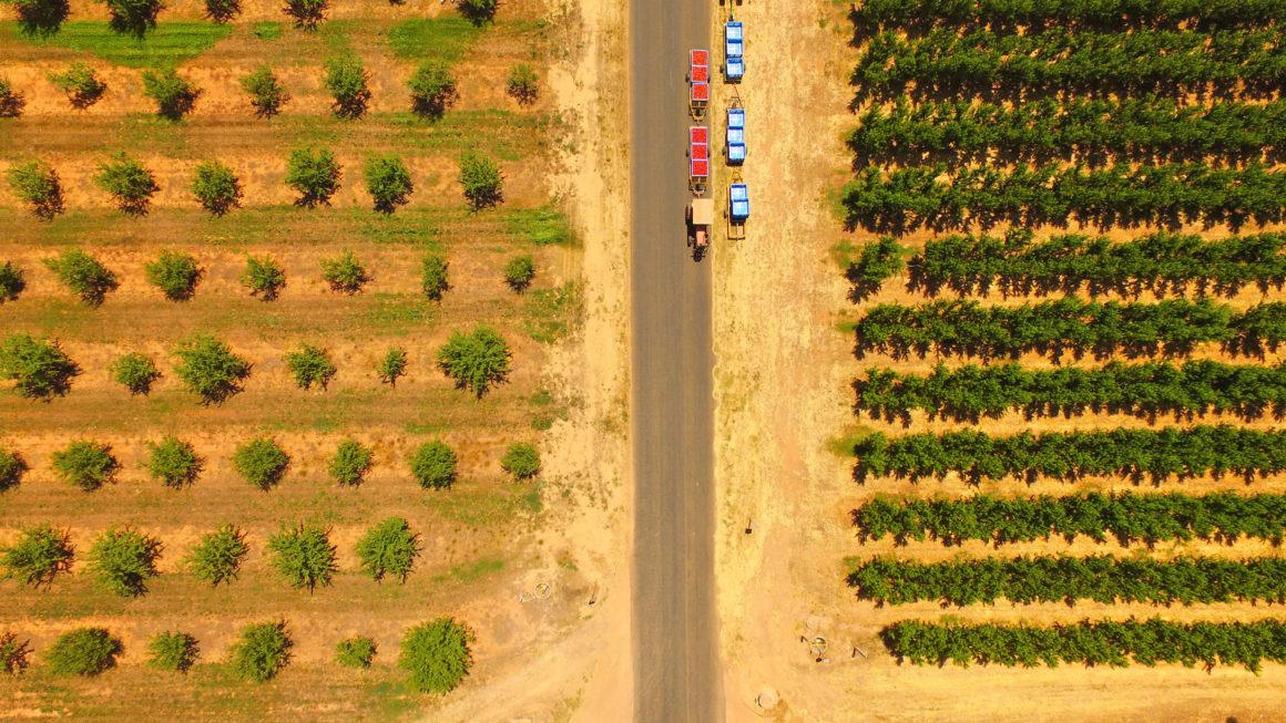 les jobs de fruit picking, serveur et dans la construction en Australie