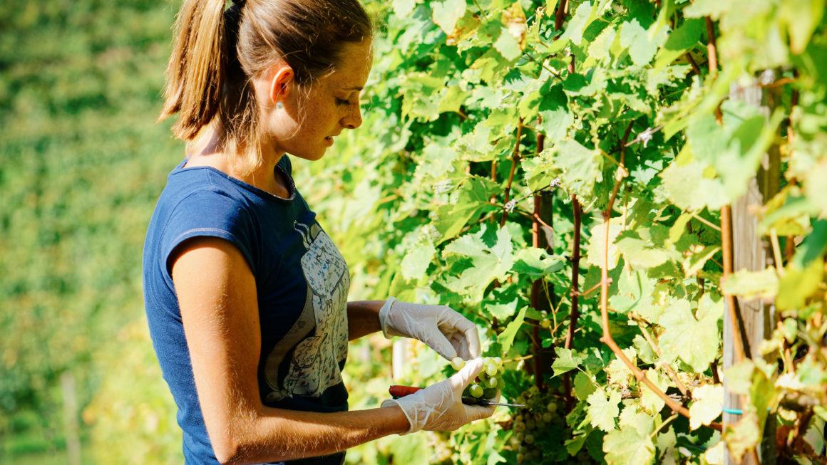 Une aide financière pour les Pvtistes en Australie qui travaillent dans l'agriculture ?