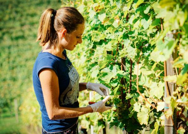 Le gouvernement australien va aider financièrement les travailleurs agricoles en PVT